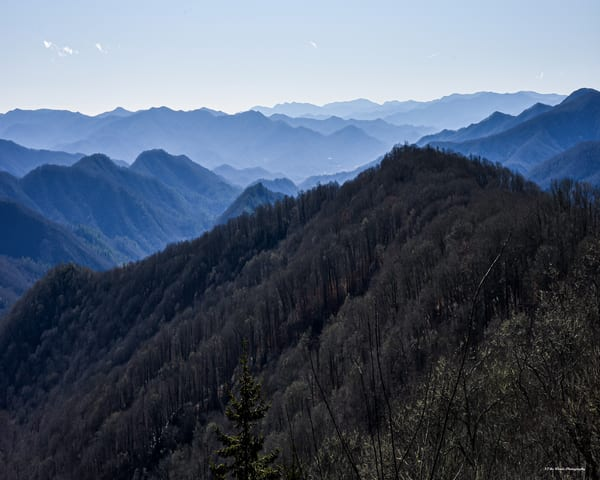 Great Smoky Mountains Photography Art | N2 the Woods Photography - Nature and Wildlife Artwork