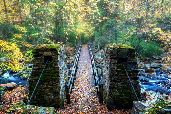 The Forest Entrance Photography Art | Ken Smith Gallery