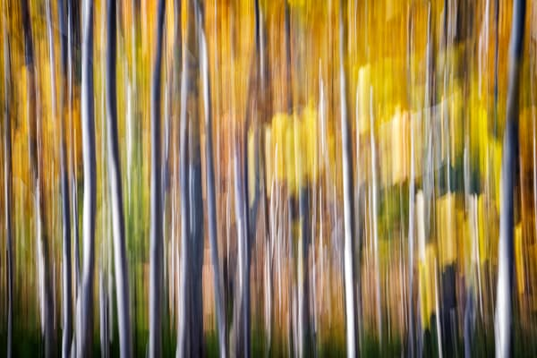 Autumn Birches Abstract | Shop Photography by Rick Berk