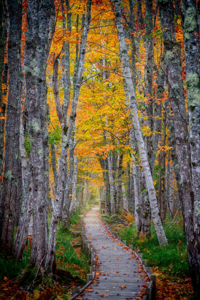 Jesup Path II | Shop Photography by Rick Berk