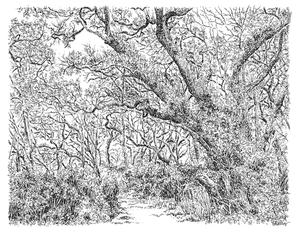 sand live oaks (chaotic order), big talbot island (A1A), florida:  fine art prints in elegant pen available for purchase online