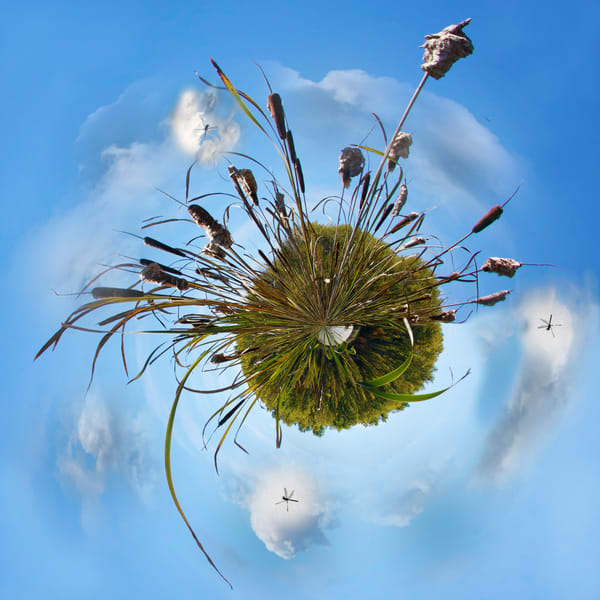 Dragonfly Planet, Fine Art Photography by Laura Grisamore.