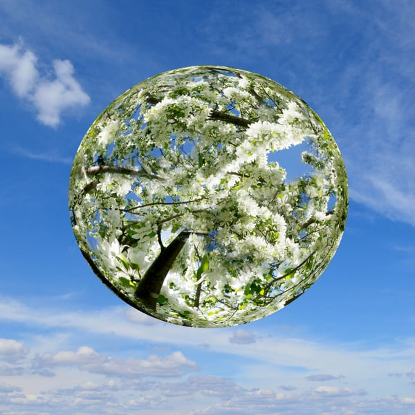 Spring Planet, Fine Art Photography by Laura Grisamore