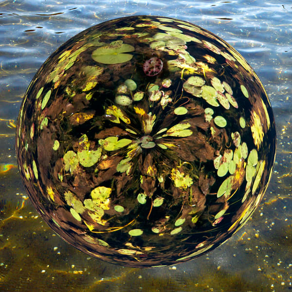Lily Pad Planet, Fine Art Photography by Laura Grisamore.