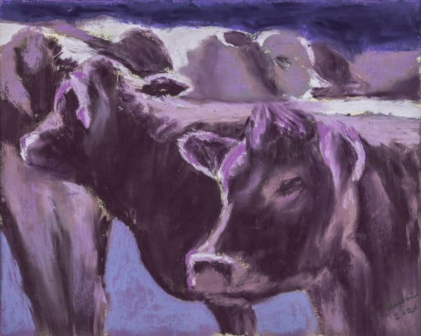 Cows Purple Art | capeanngiclee