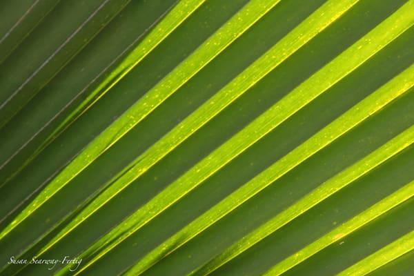 Palm Art | Susan Searway Art & Design