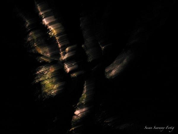 Night Trees 1 Art | Susan Searway Art & Design