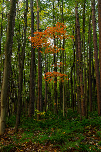 Pennsylvania forest at Autumn