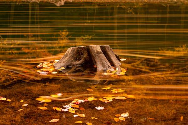 Stump in a Pennsylvania lake