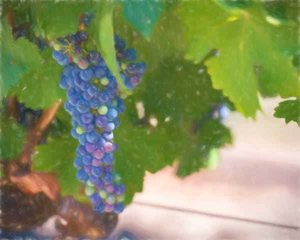 Cabernet Ii Photography Art | Greg Starnes Phtography