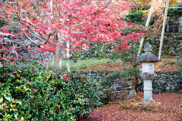 Tree And Symbol  Photography Art | Carol's Little World