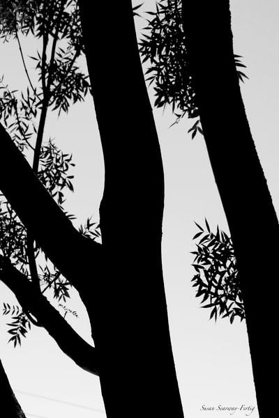 Trees 5 Art | Susan Searway Art & Design