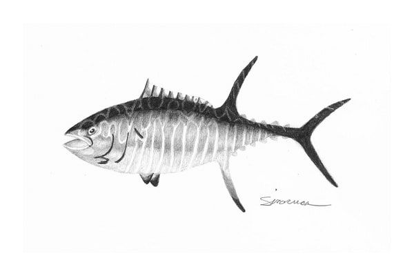Yellow Fin Tuna Original Drawing Art | juliesiracusa
