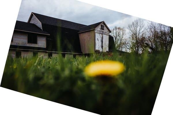 Nightmare In Yellow Photography Art | LenaDi Photography LLC