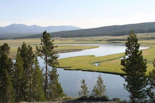 Yellowstone National Park 7 Art | Susan Searway Art & Design