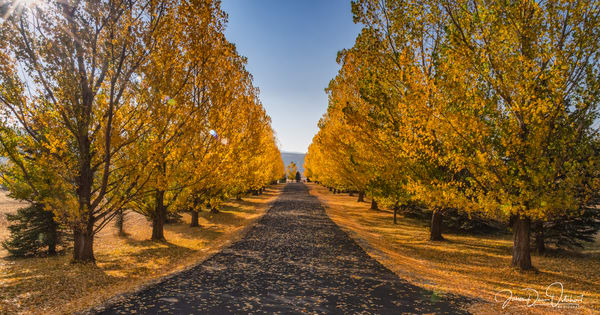 The Color Drive 3598 Photography Art | Swan Valley Photo