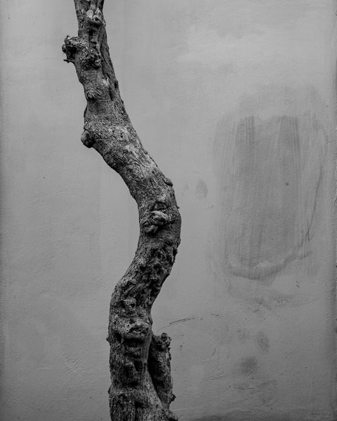 Lecce Italy - Tree & Wall bw, photo by Jeremy Simonson.