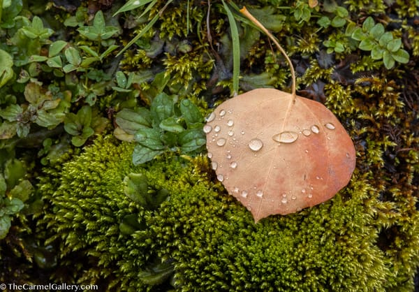 Signs Of Autumn Art | The Carmel Gallery