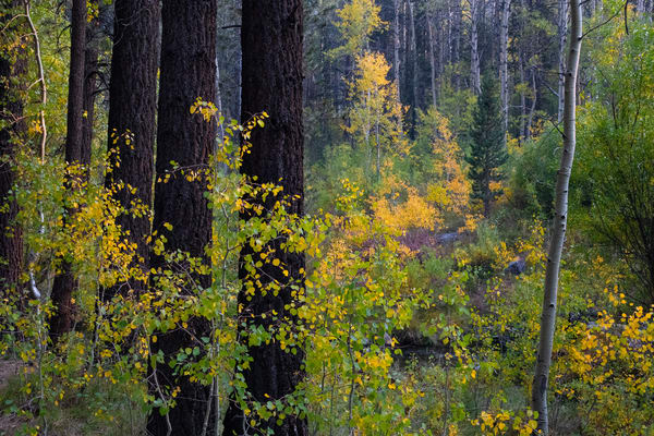 Fall Grove 1 Photography Art | Leiken Photography