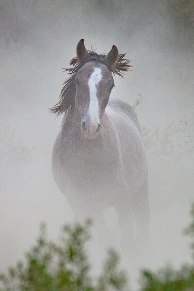 0085 Dark Horse  Art | Cunningham Gallery