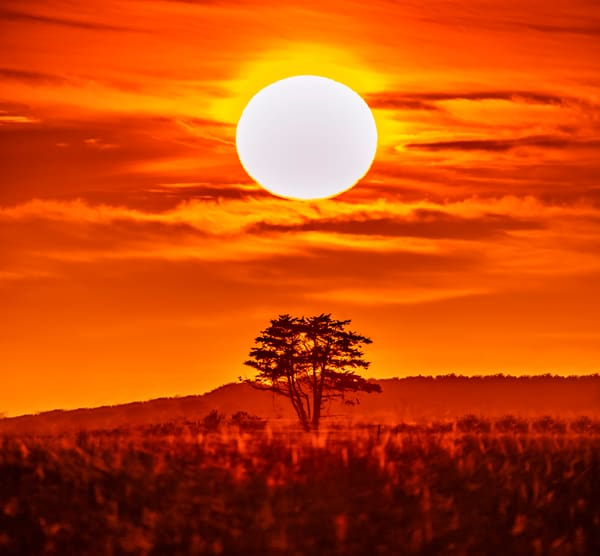 Katama Lone Tree Sunset Art | Michael Blanchard Inspirational Photography - Crossroads Gallery