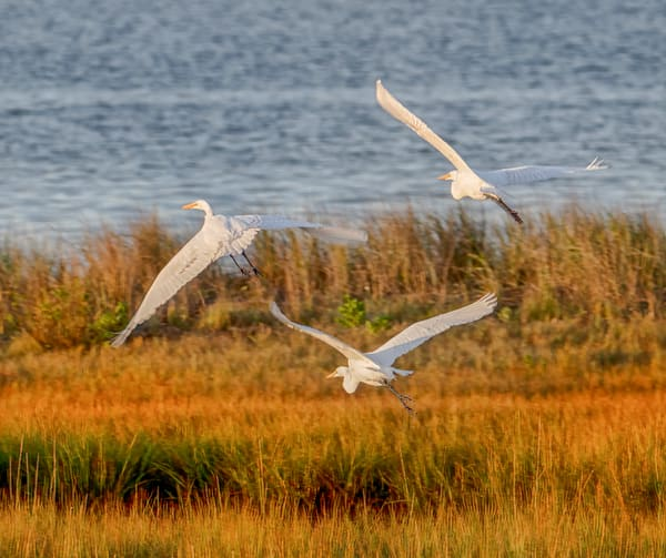 State Beach Sunset Egrets Art | Michael Blanchard Inspirational Photography - Crossroads Gallery