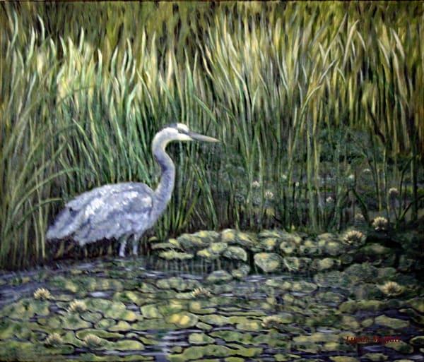 Great Blue Heron Art   Lynda Moffatt Fine Arts