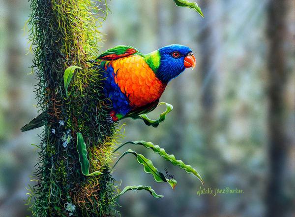 Feathered Friends - Australian Bird Paintings & Fine Art Prints