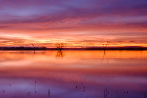 Promise of Dawn : Bosque del Apache Landscape
