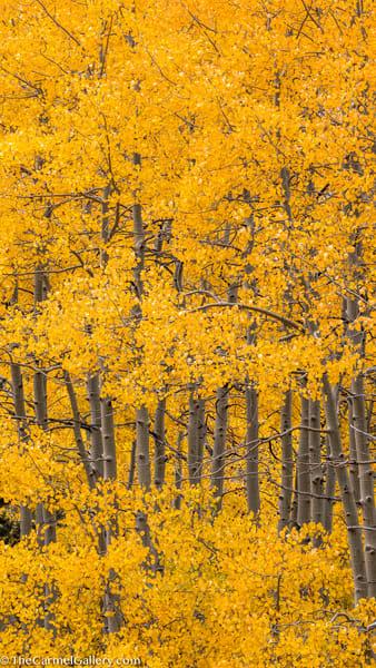 Autumn's Finery Ii Art | The Carmel Gallery