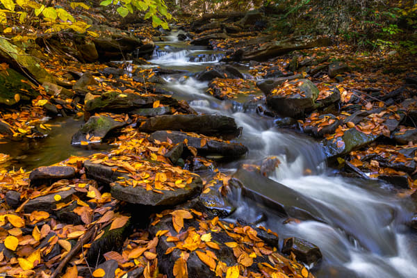 Autumn Flows Along Kitch Creek