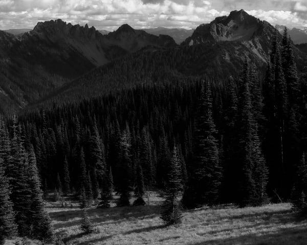 Alpine Meadow, Washington, 2019