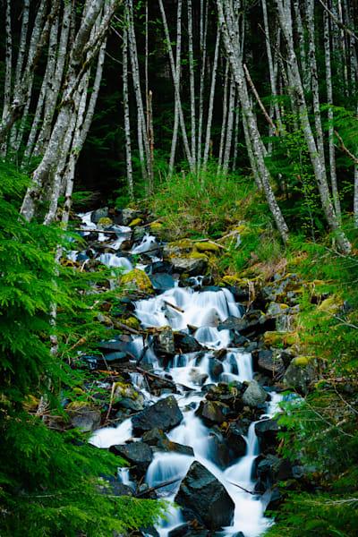Creek, Snoqualmie River Valley, Washington, 2013