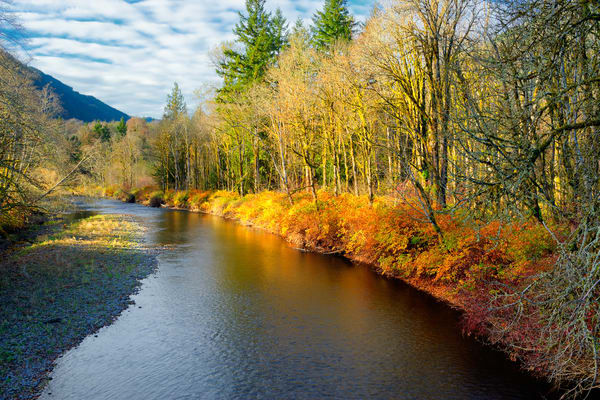 Late Autumn Colors, Tilton River, Lewis County, Washington, 2013