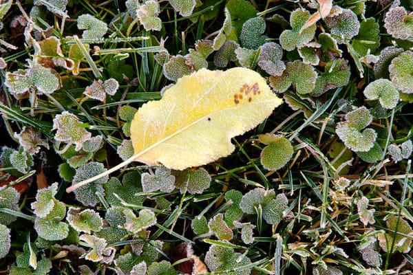 Light Autumn Frost, Kittitas County, Washington, 2013