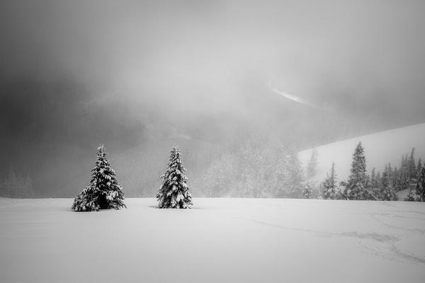 Snowy Landscape, Hurricane Ridge, Olympic National Park, Washington, 2016