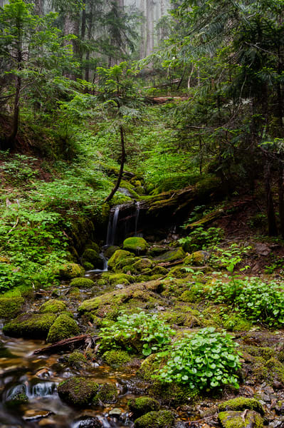 Seasonal Creek, Spray Park Trail, Mount Rainier, Washington, 2017