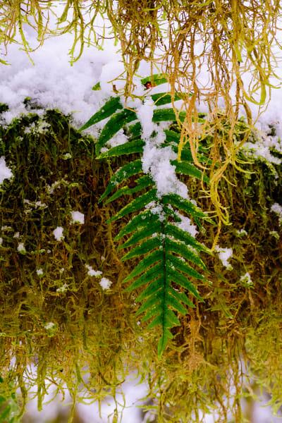 Snow and Moss, Rasar State Park, Washington, 2016