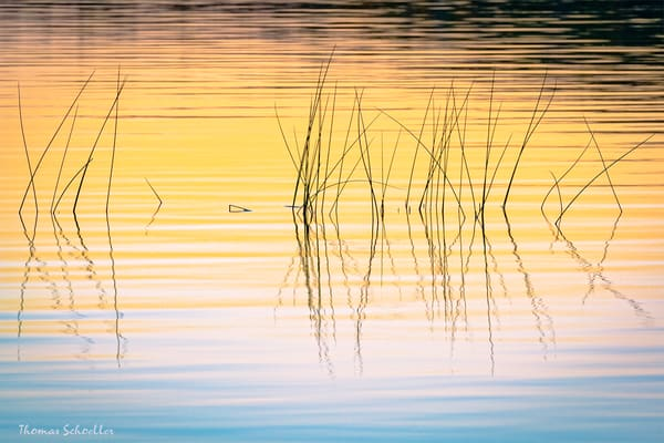 Meditative pond reeds at sunset | Fine Art Nature Minimalist photography prints for sale