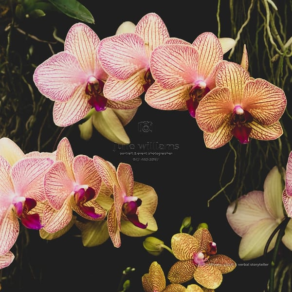 Yellow And Pink Orchids | Julie Williams Fine Art Photography