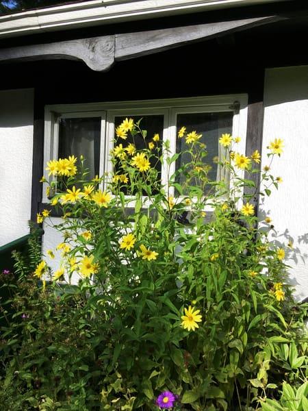 Zuzana's Garden - Golden Yellow Flowers