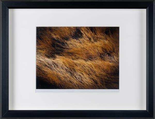Grasslands - framed