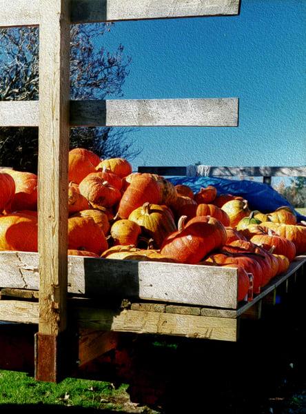 Vermont Pumpkins