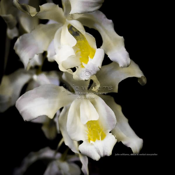 Exotic Orchids | Julie Williams Fine Art Photography