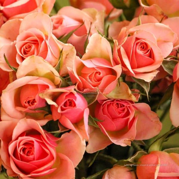 Peach Roses | Julie Williams Fine Art Photography