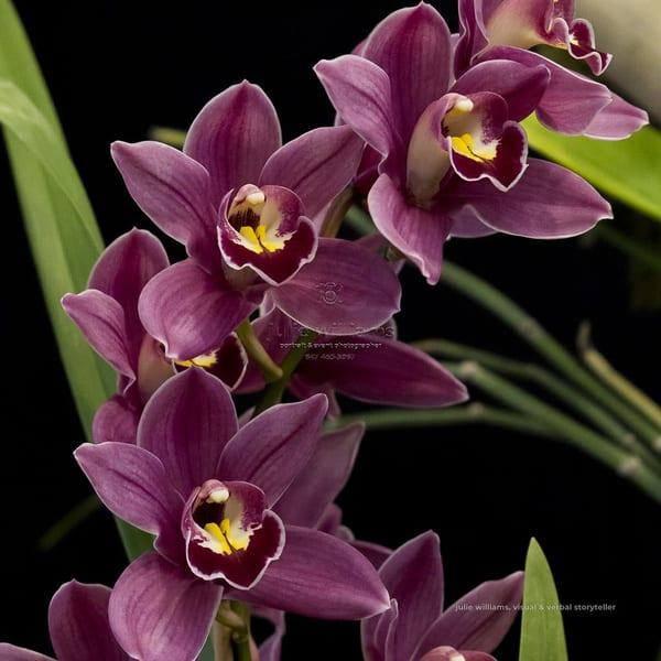 Stunning Orchids | Julie Williams Fine Art Photography