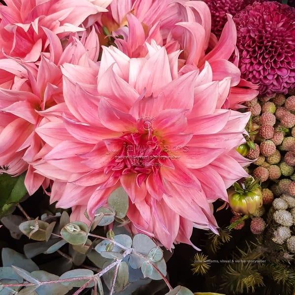 A Splash Of Pink | Julie Williams Fine Art Photography