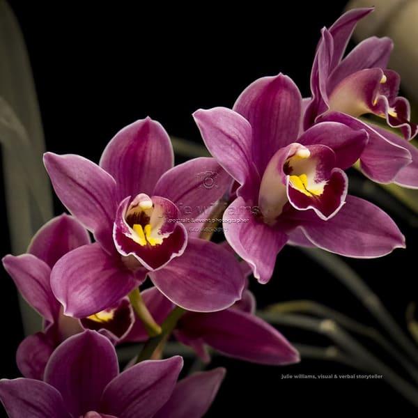 Purple Orchids | Julie Williams Fine Art Photography