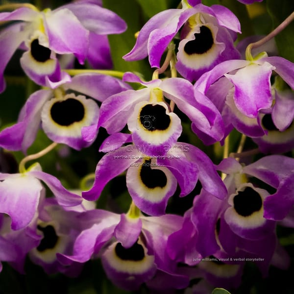 Unusual Orchids | Julie Williams Fine Art Photography