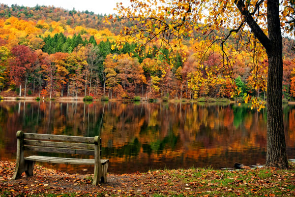 Bench With A View Photography Art | Ken Smith Gallery